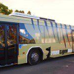 tiger bus